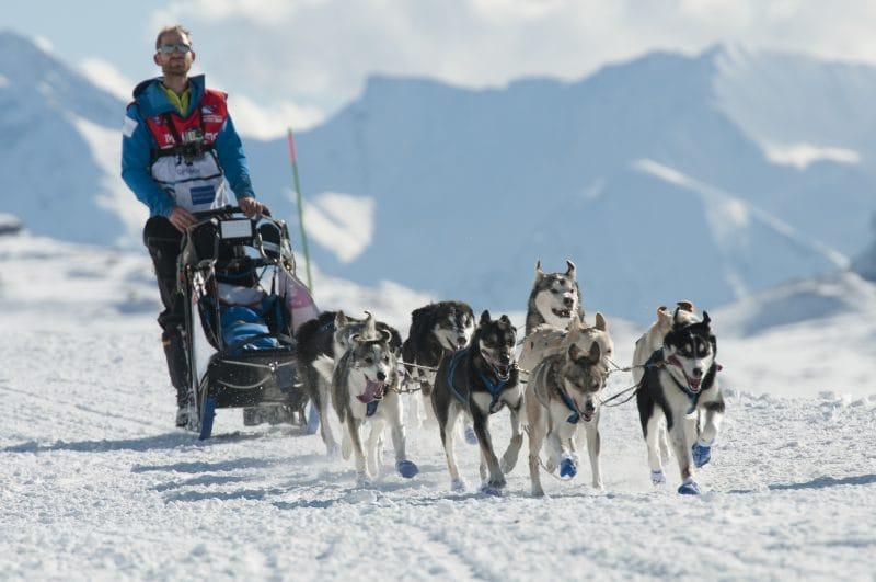 dog sledding in les gets