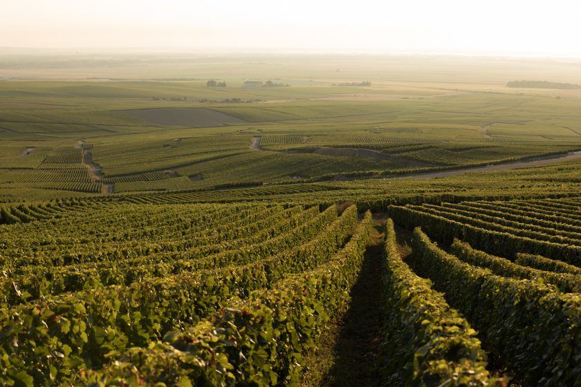 From grapes to glass – The Journey of Perrier-Jouët Champagne.